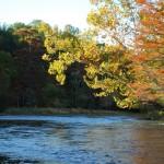 Wild Goose Canoe & Kayak